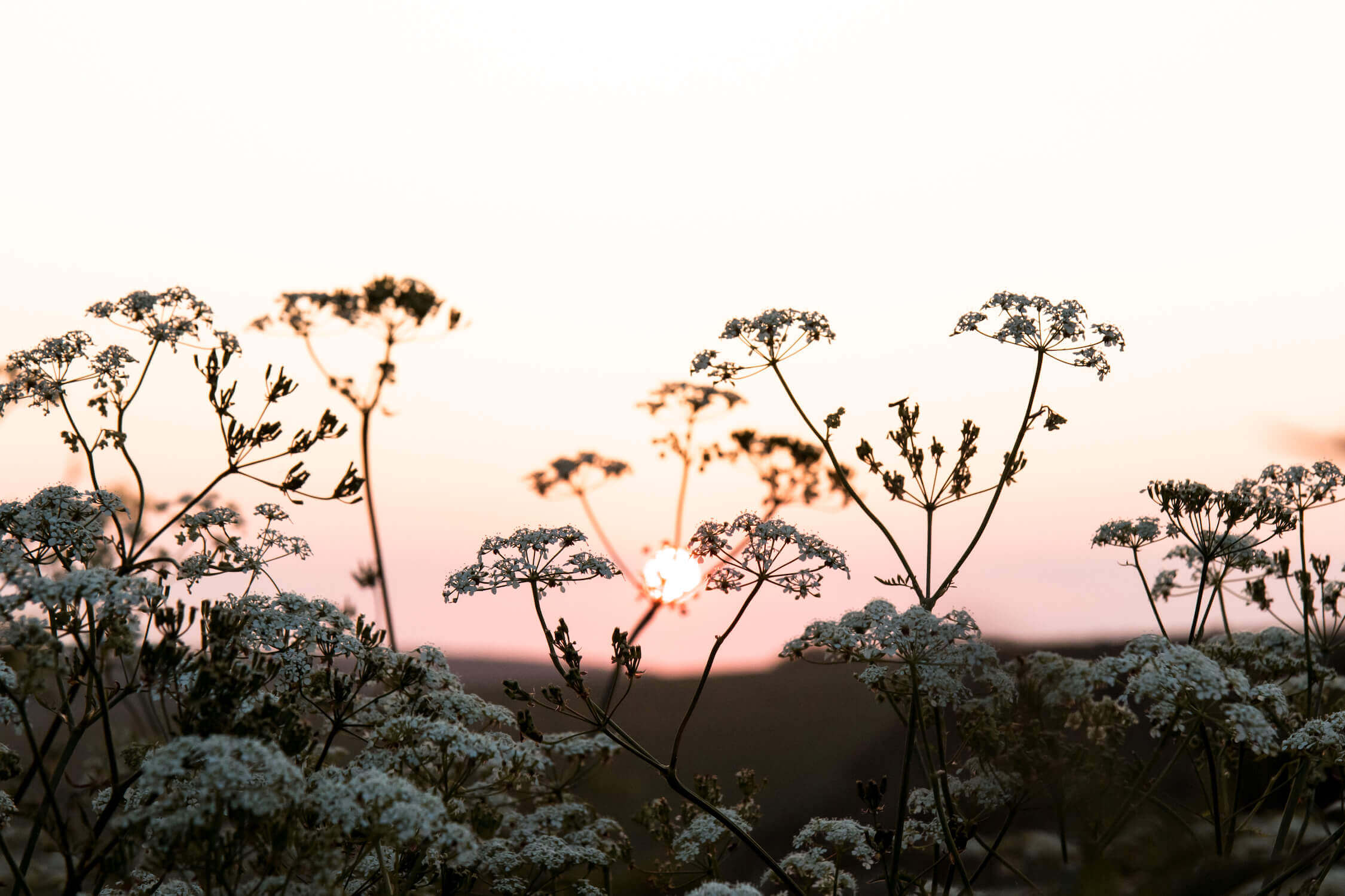 Luxury holiday lets in Sussex - Cow Parsley
