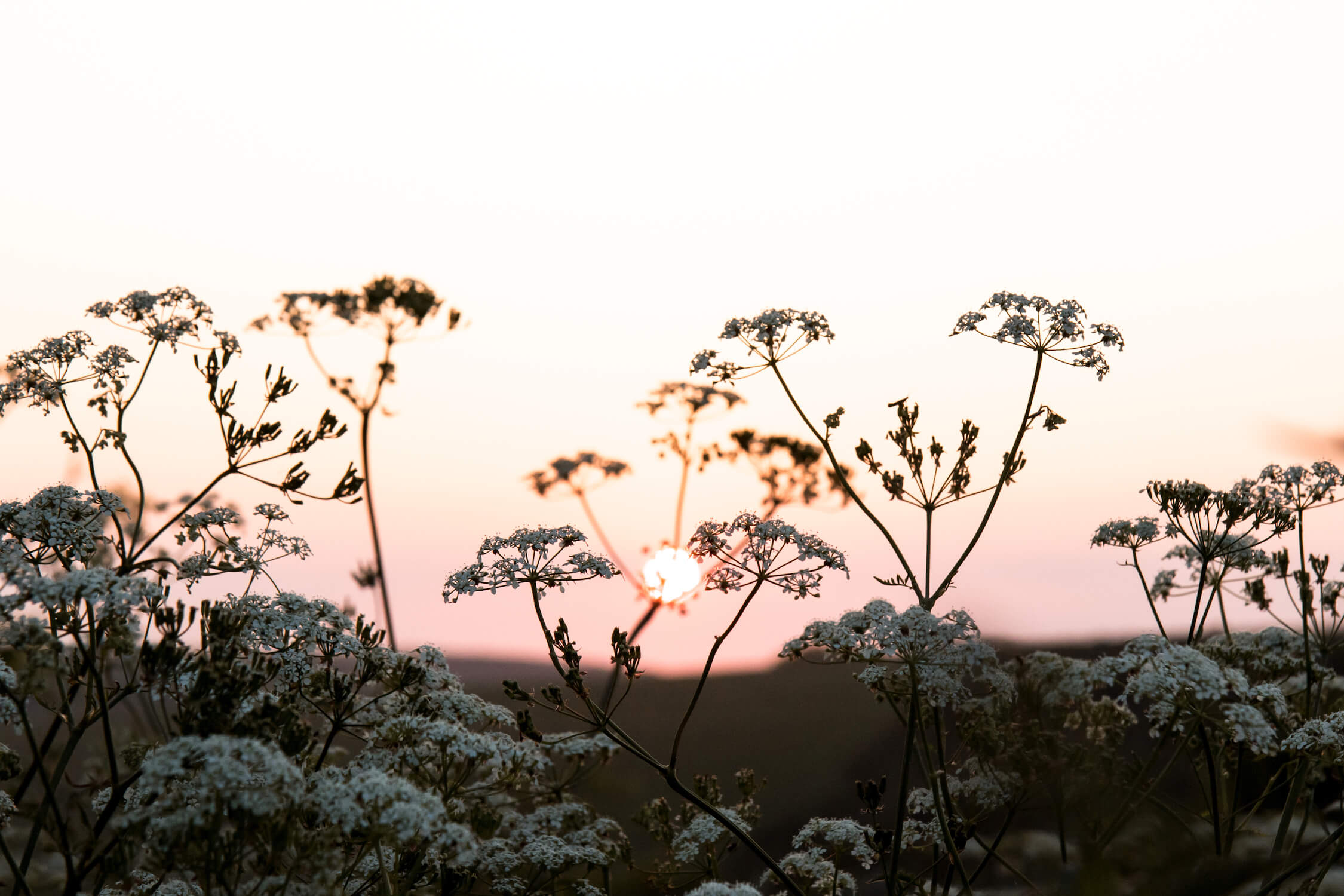 Humphrey & Grace Photography - cow parsley South Downs