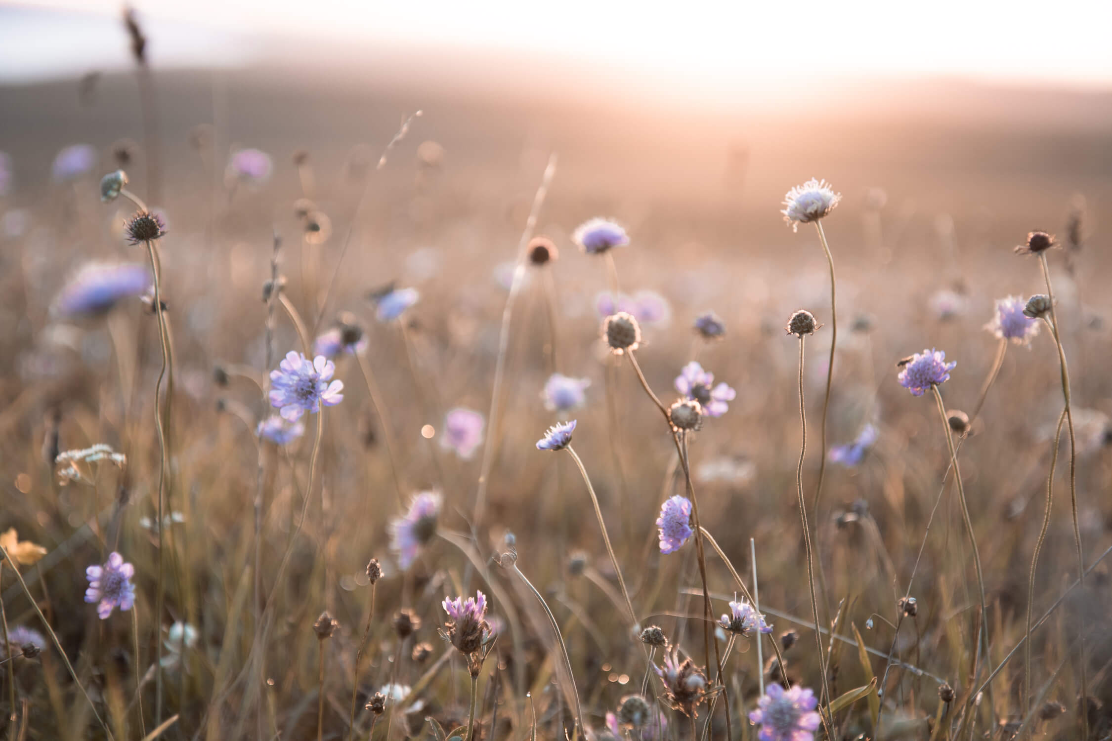 Humphrey & Grace Photography - wildflowers South Downs