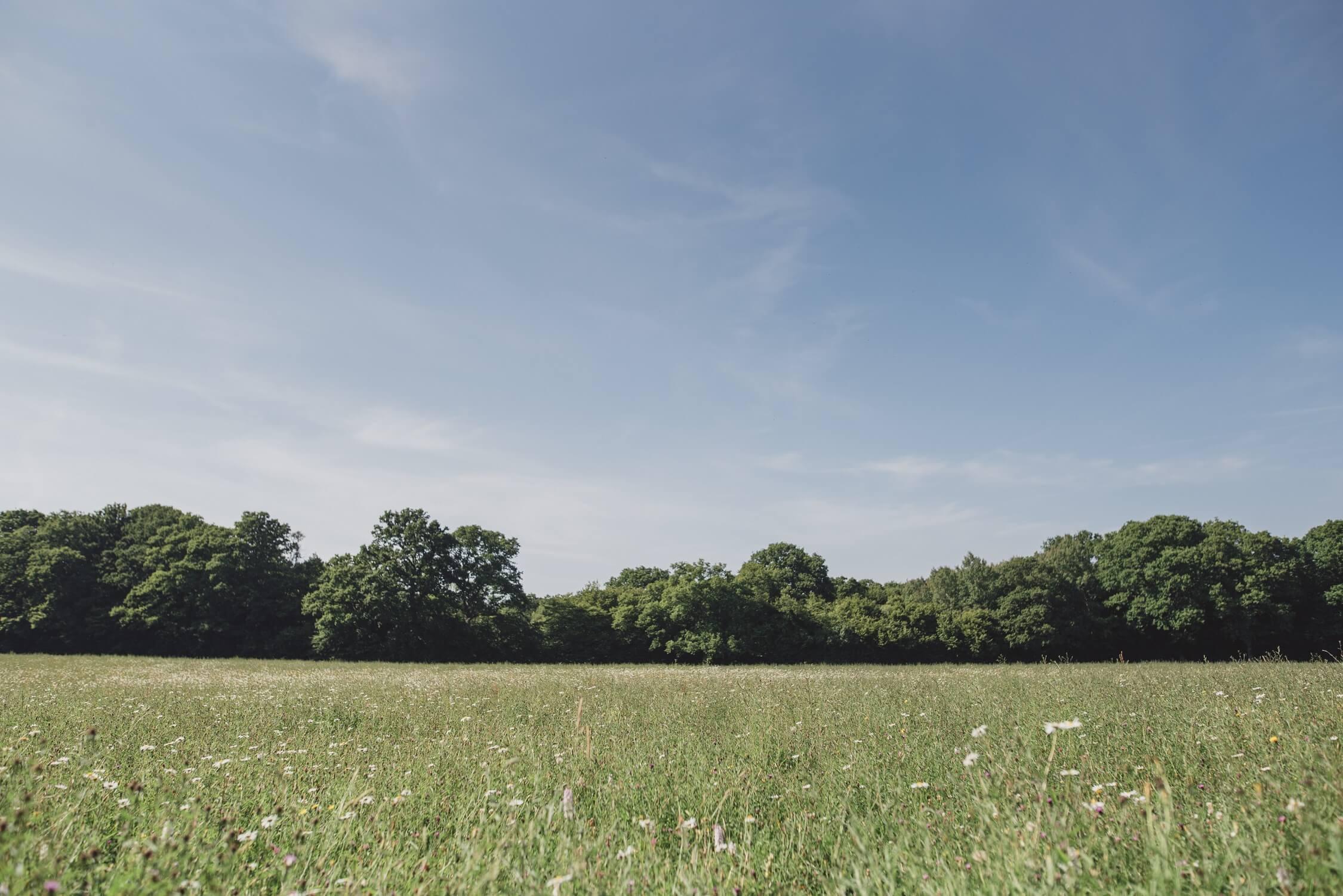 Swallowtail Hill Farm - open fields