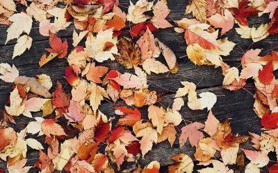 Ideas for an Autumn Escape