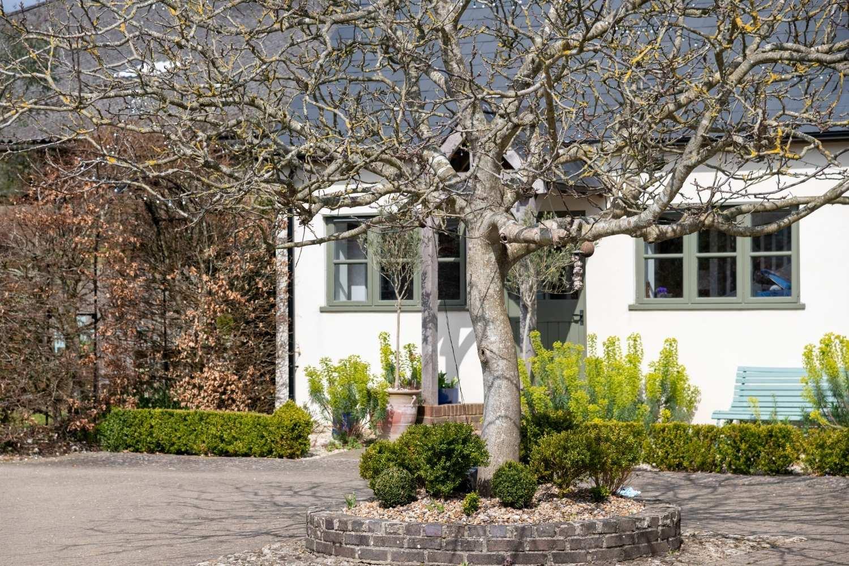Courtyard with walnut tree