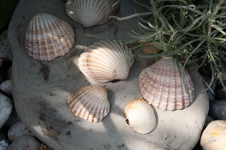Beachcomber finds
